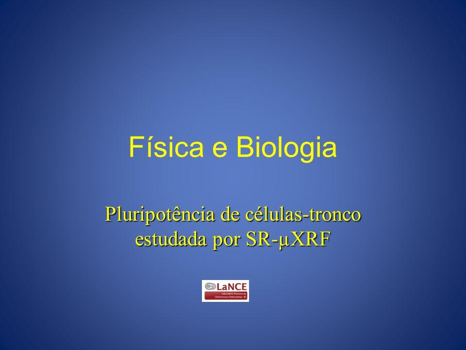 Física e Biologia Pluripotência de células-tronco estudada por SR-µXRF