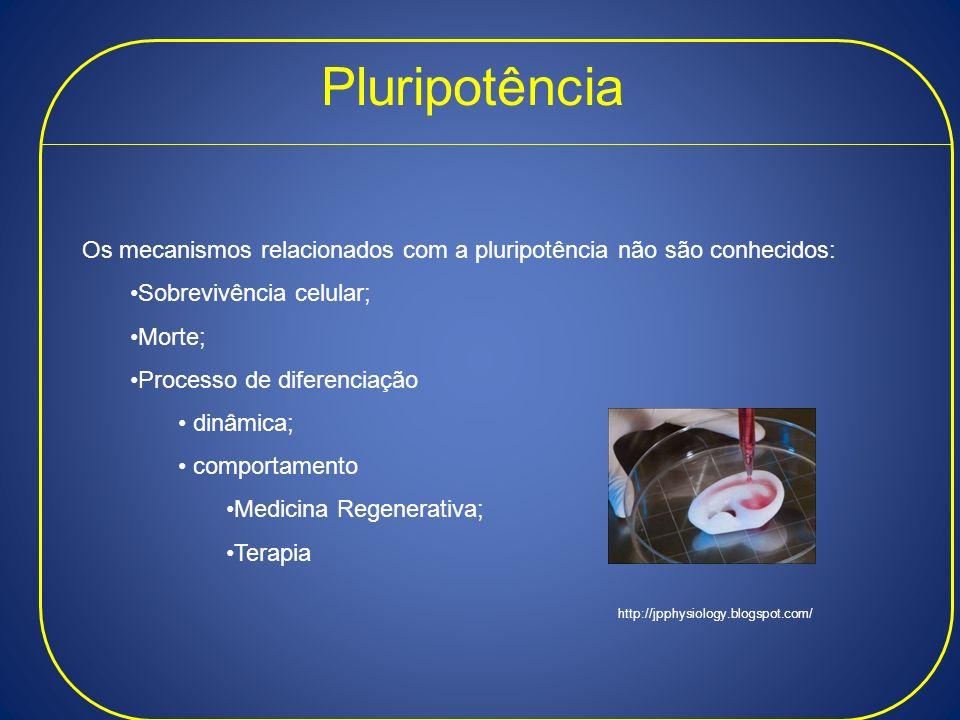 Pluripotência Os mecanismos relacionados com a pluripotência não são conhecidos: Sobrevivência celular; Morte; Processo de diferenciação dinâmica; com
