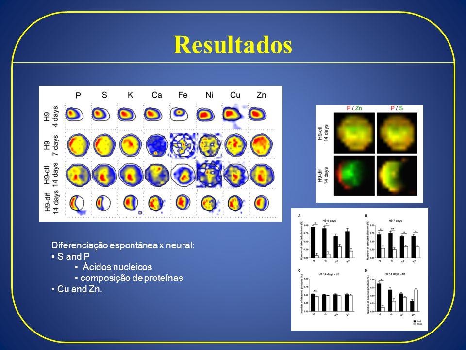 Resultados Diferenciação espontânea x neural: S and P Ácidos nucleicos composição de proteínas Cu and Zn.