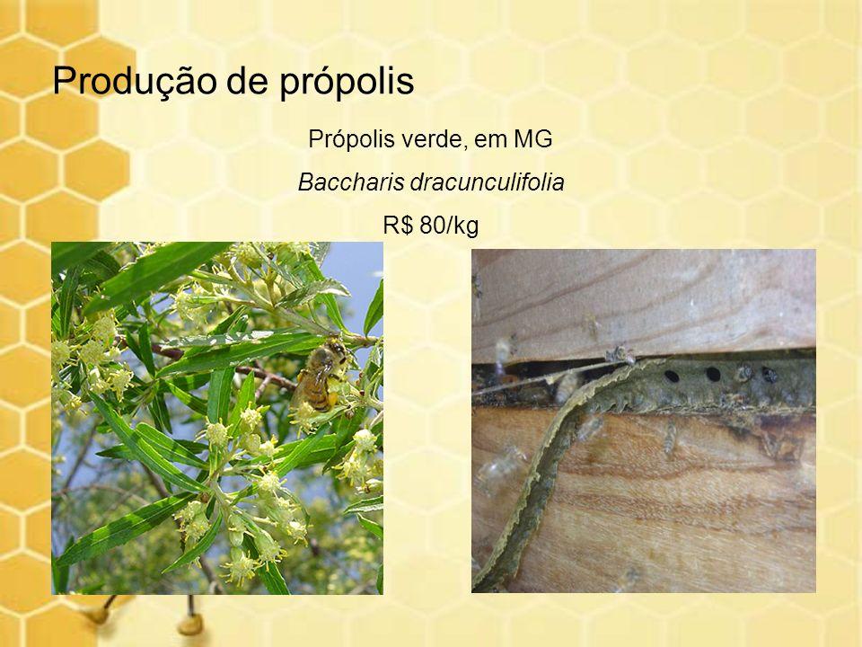 Produção de própolis Própolis verde, em MG Baccharis dracunculifolia R$ 80/kg