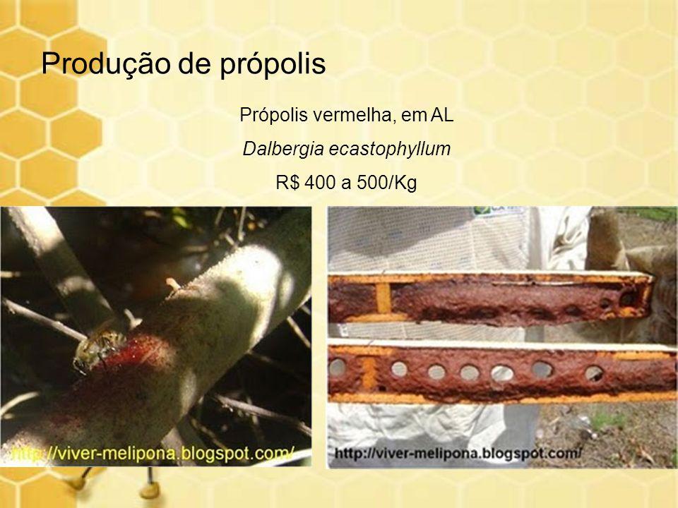 Produção de própolis Própolis vermelha, em AL Dalbergia ecastophyllum R$ 400 a 500/Kg
