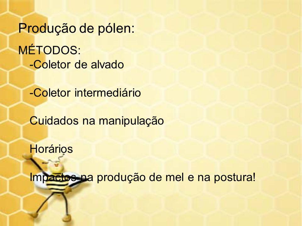 Produção de pólen: MÉTODOS: -Coletor de alvado -Coletor intermediário Cuidados na manipulação Horários Impactos na produção de mel e na postura!