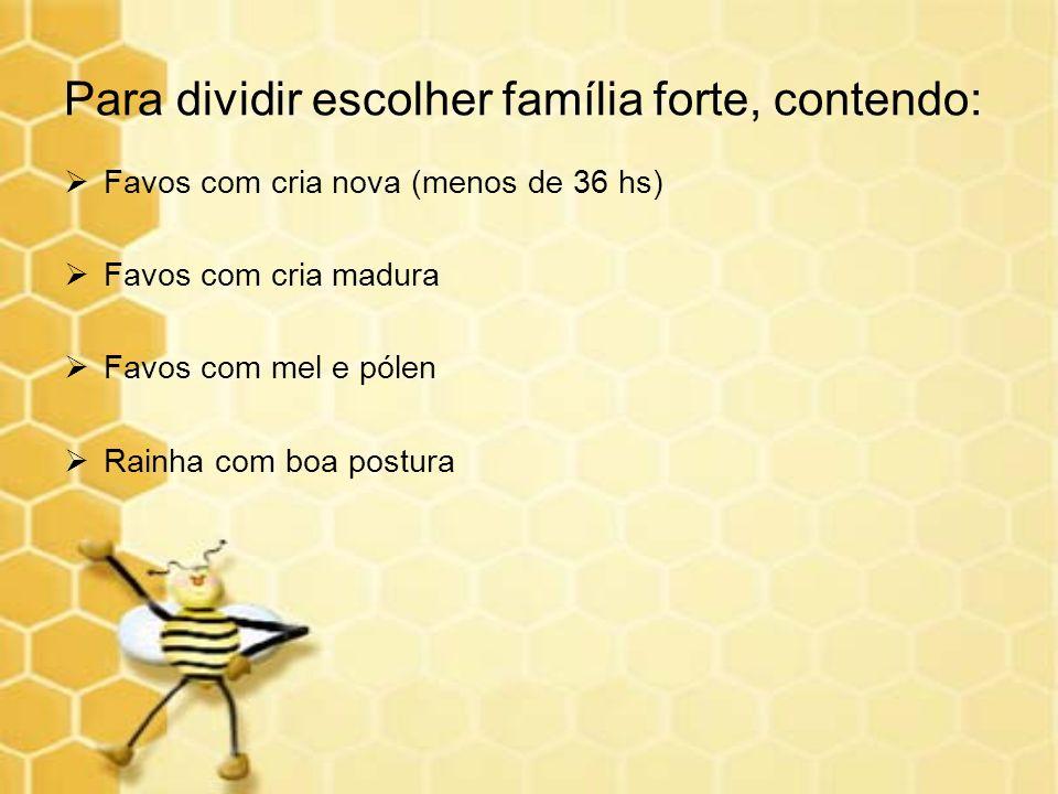 Para dividir escolher família forte, contendo: Favos com cria nova (menos de 36 hs) Favos com cria madura Favos com mel e pólen Rainha com boa postura