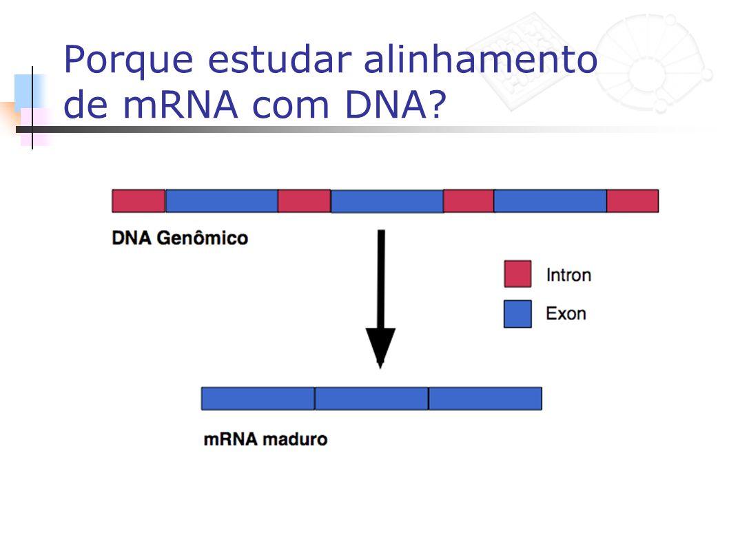 Porque estudar alinhamento de mRNA com DNA?
