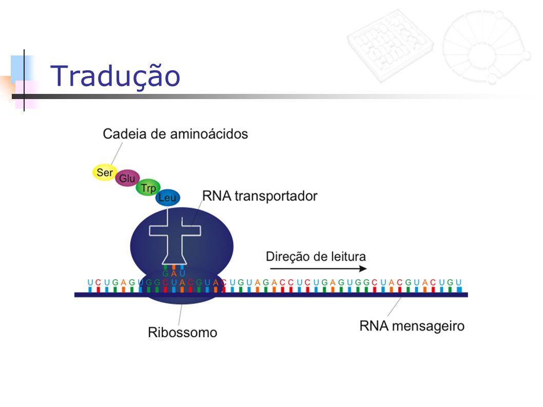 Polimorfismos e SNP Polimorfismo: dois ou mais alelos diferentes em indivíduos da mesma espécie Deve aparecer em pelo menos 1% da população SNP: polimorfismo que ocorre em apenas uma base da seqüência SNP sinônimo: não modifica o amino á cido SNP não sinônimo: modifica o amino á cido