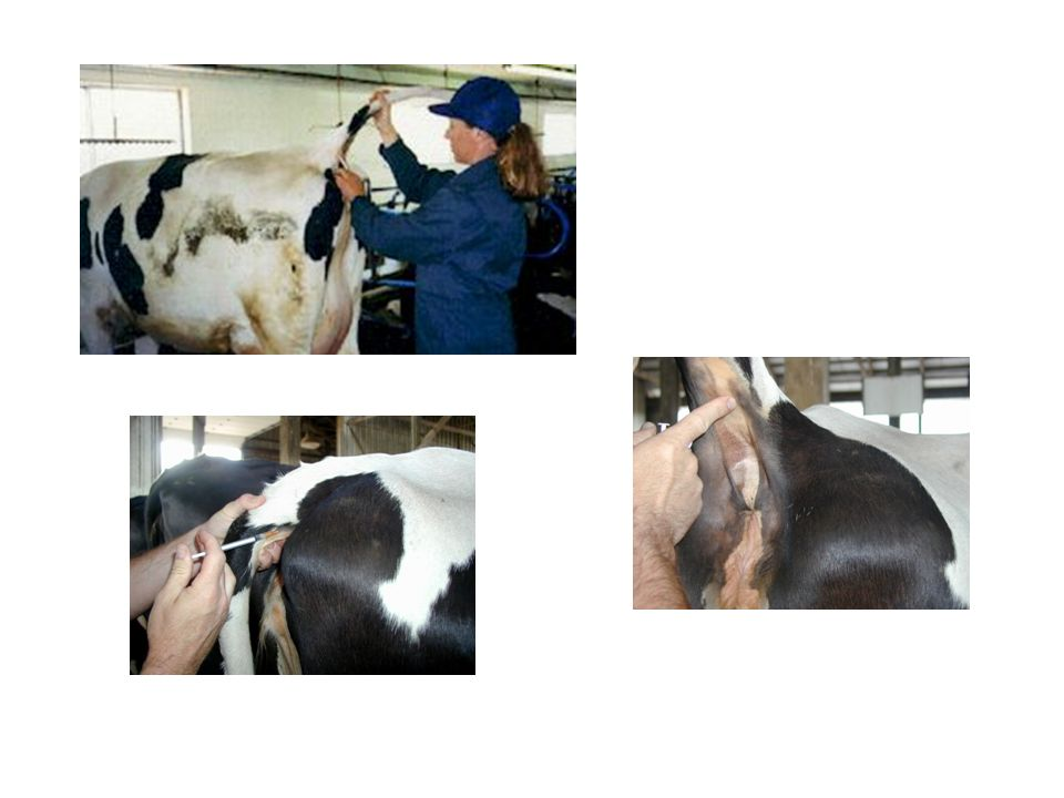 The Michigan Department of Agriculture for bovine Tuberculosis testing