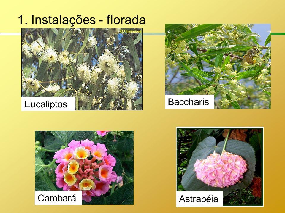 1. Instalações - florada Eucaliptos Astrapéia Baccharis Cambará