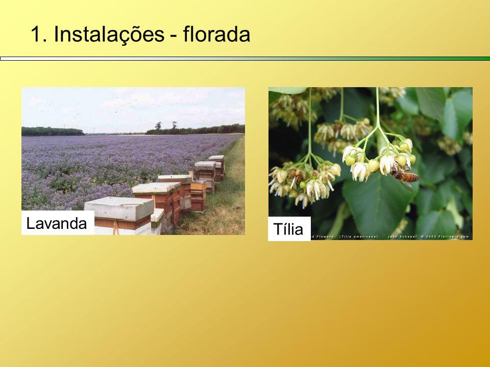 1. Instalações - florada Lavanda Tília