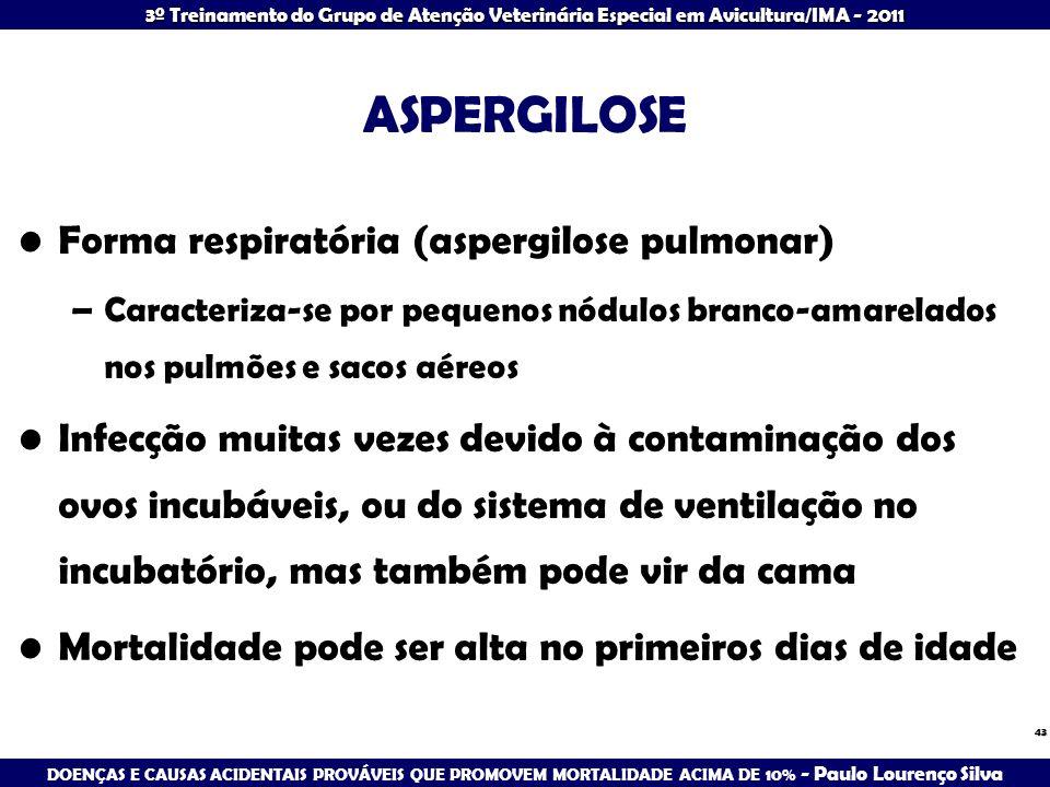 3º Treinamento do Grupo de Atenção Veterinária Especial em Avicultura/IMA - 2011 ASPERGILOSE Forma respiratória (aspergilose pulmonar) –Caracteriza-se