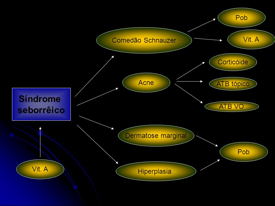 Dermatose marginal Hiperplasia Acne Comedão Schnauzer ATB VO Corticóide ATB tópico Pob Vit. A Síndrome seborrêico Pob Vit. A