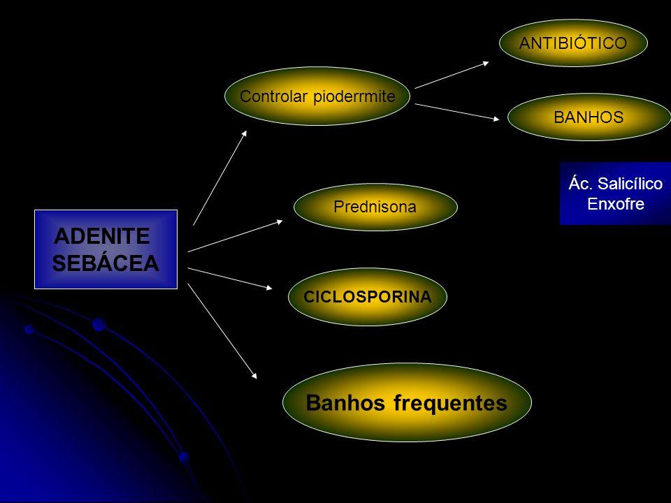 CICLOSPORINA Banhos frequentes Prednisona Controlar pioderrmite ANTIBIÓTICO BANHOS Ác. Salicílico Enxofre ADENITE SEBÁCEA