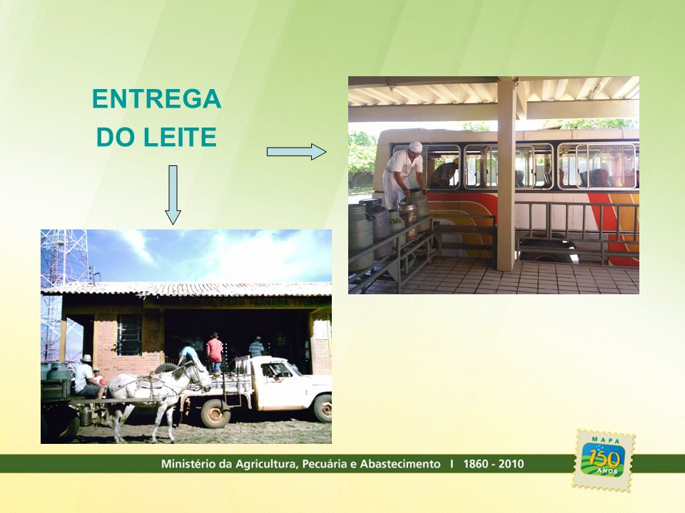 ENTREGA DO LEITE