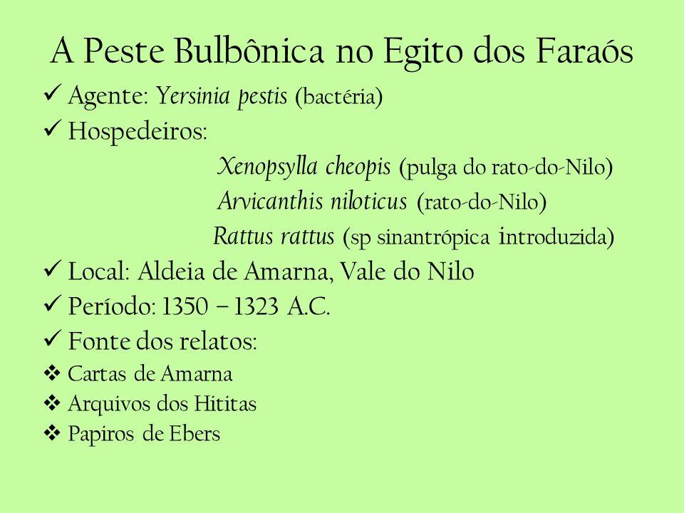 A Peste Bulbônica no Egito dos Faraós Agente: Yersinia pestis (bactéria) Hospedeiros: Xenopsylla cheopis (pulga do rato-do-Nilo) Arvicanthis niloticus