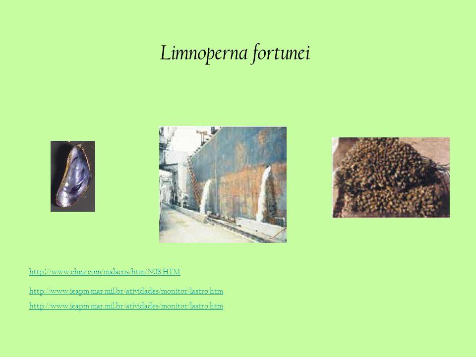 Limnoperna fortunei http://www.ieapm.mar.mil.br/atividades/monitor/lastro.htm http : //www.chez.com/malacos/htm/N08.HTM http://www.ieapm.mar.mil.br/at