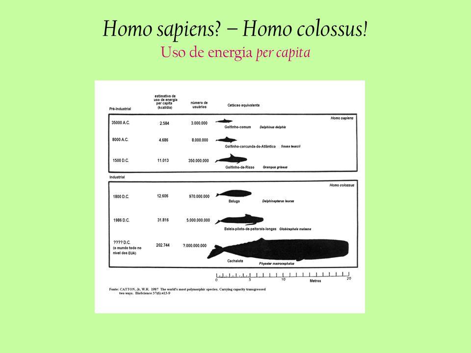 Homo sapiens? – Homo colossus! Uso de energia per capita