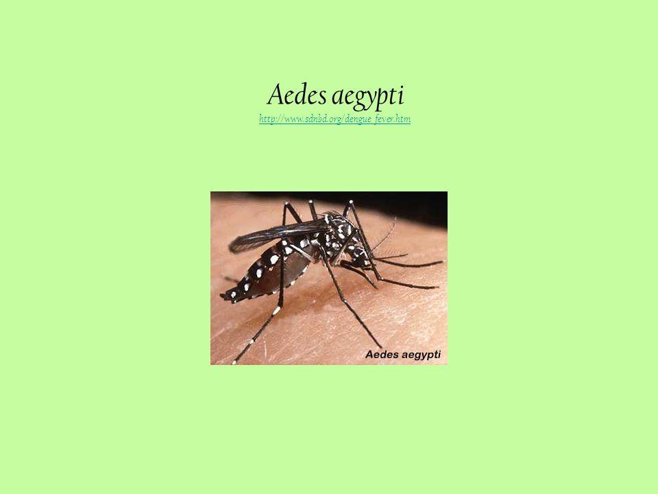 Distribuição geográfica de Aedes aegypti http://www.cdc.gov/ncidod/dvbid/dengue/slideset/spanish/set1/viii/slide03.htm http://www.cdc.gov/ncidod/dvbid/dengue/slideset/spanish/set1/viii/slide03.htm
