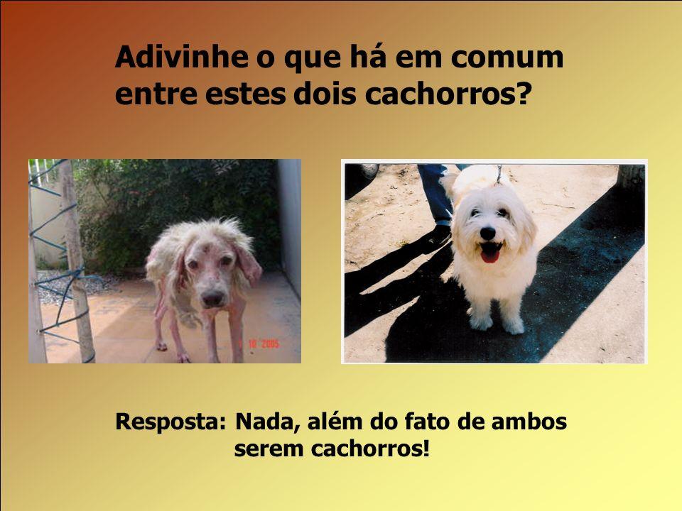 Adivinhe o que há em comum entre estes dois cachorros? Resposta: Nada, além do fato de ambos serem cachorros!
