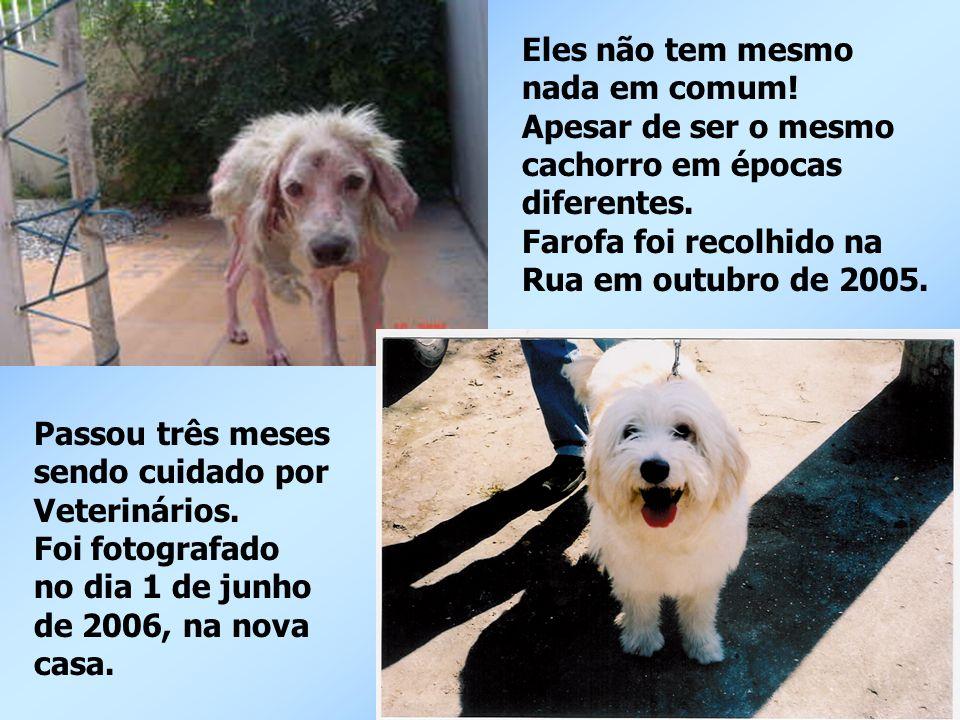 Eles não tem mesmo nada em comum! Apesar de ser o mesmo cachorro em épocas diferentes. Farofa foi recolhido na Rua em outubro de 2005. Passou três mes