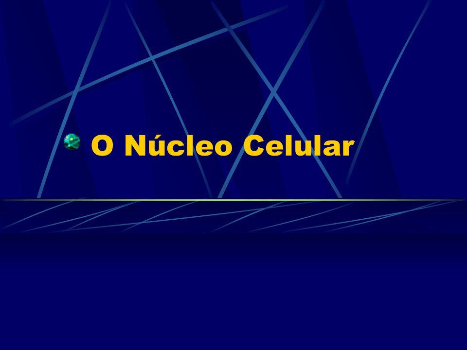Componentes do núcleo
