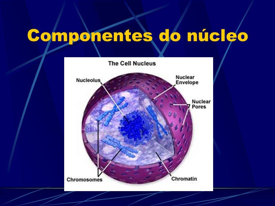 Ácidos nucléicos DNA: Ácido desoxirribonucleico É formado por uma dupla hélice Possui 4 tipos de bases nitrogenadas, representadas pelas letras A-T-C-G.
