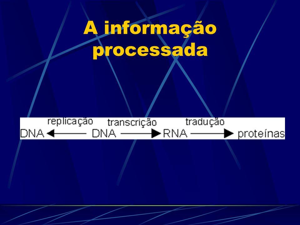 A informação processada