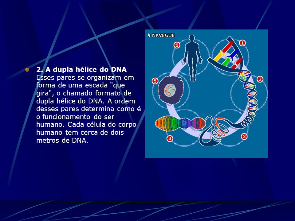 2. A dupla hélice do DNA Esses pares se organizam em forma de uma escada