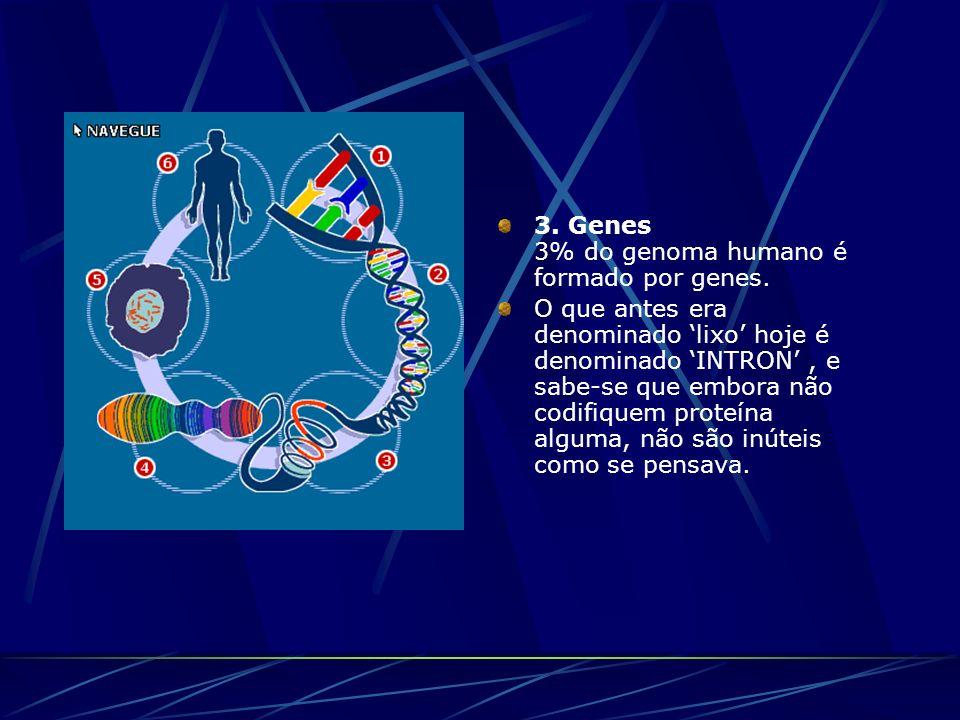 3. Genes 3% do genoma humano é formado por genes. O que antes era denominado lixo hoje é denominado INTRON, e sabe-se que embora não codifiquem proteí