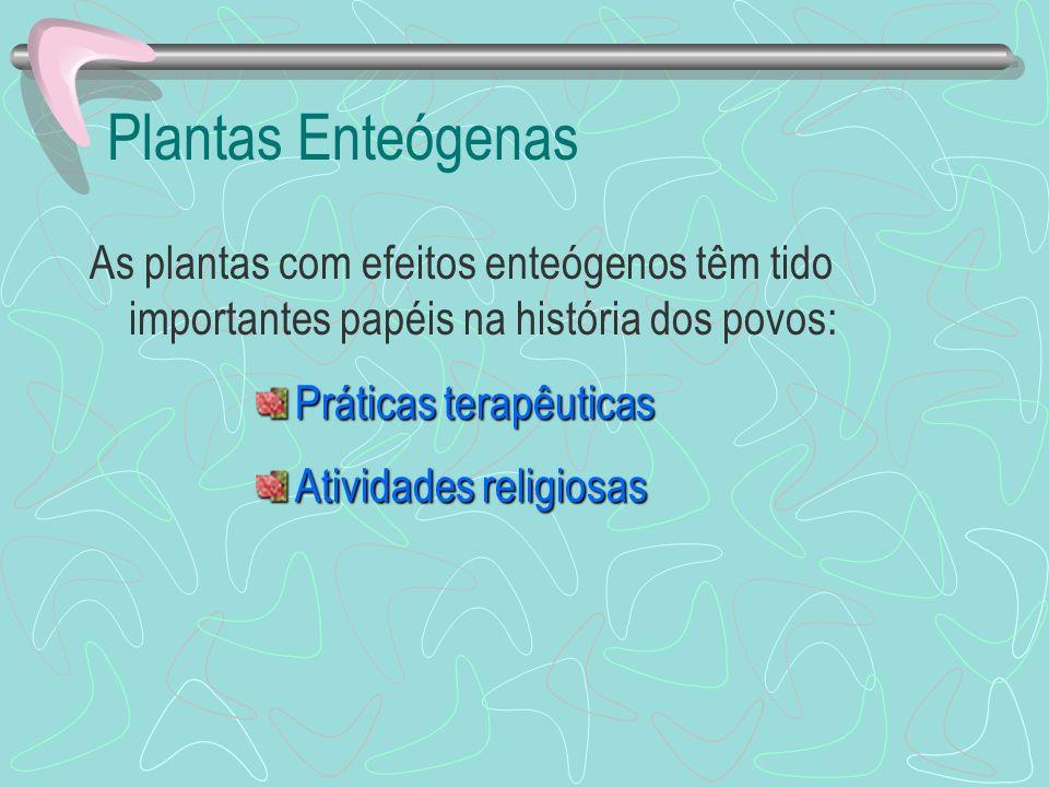 Plantas Enteógenas As plantas com efeitos enteógenos têm tido importantes papéis na história dos povos: Práticas terapêuticas Atividades religiosas