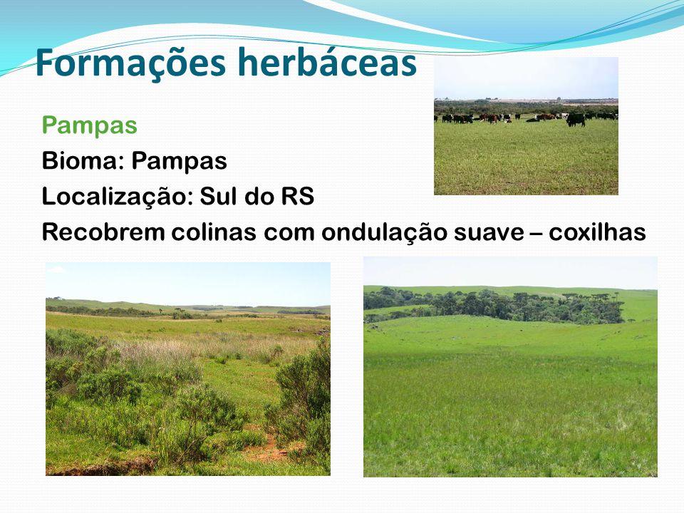 Formações herbáceas Pampas Bioma: Pampas Localização: Sul do RS Recobrem colinas com ondulação suave – coxilhas