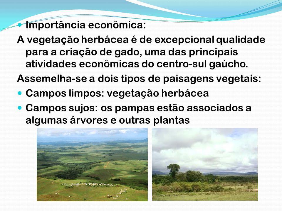Importância econômica: A vegetação herbácea é de excepcional qualidade para a criação de gado, uma das principais atividades econômicas do centro-sul