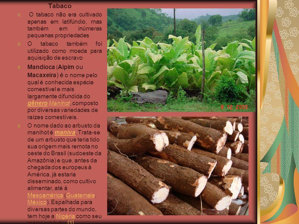 Tabaco O tabaco não era cultivado apenas em latifúndio, mas também em inúmeras pequenas propriedades O tabaco também foi utilizado como moeda para aqu