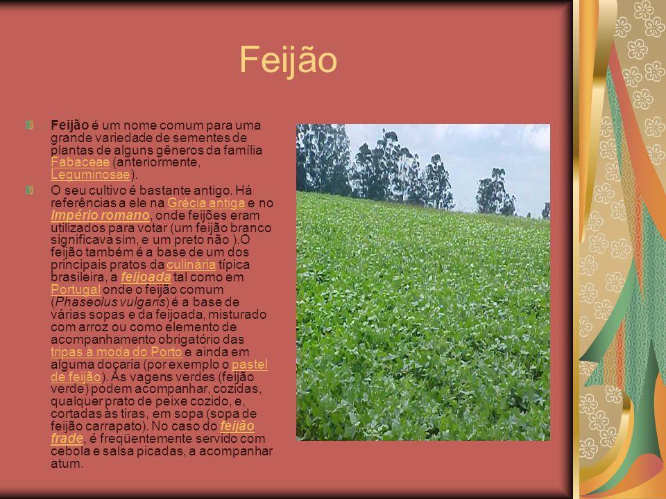Feijão Feijão é um nome comum para uma grande variedade de sementes de plantas de alguns gêneros da família Fabaceae (anteriormente, Leguminosae). Fab