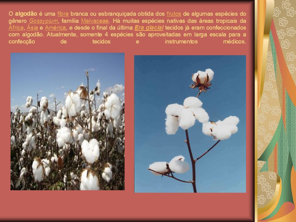 O algodão é uma fibra branca ou esbranquiçada obtida dos frutos de algumas espécies do gênero Gossypium, família Malvaceae. Há muitas espécies nativas
