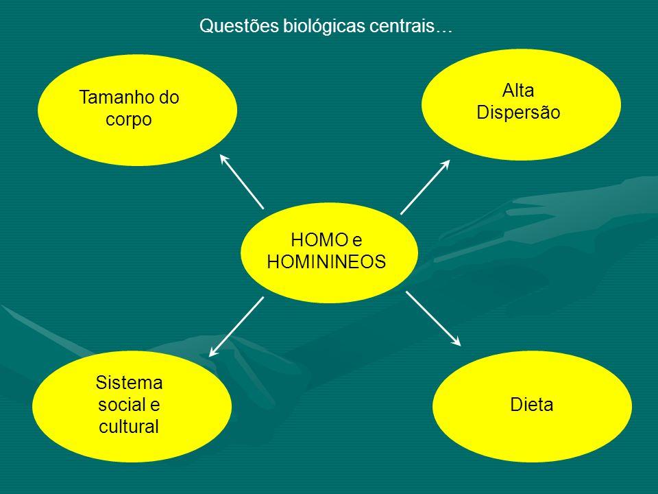 Questões biológicas centrais… Tamanho do corpo Dieta Alta Dispersão Sistema social e cultural HOMO e HOMININEOS