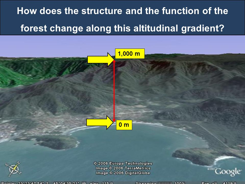 0 m 1,000 m How does the structure and the function of the forest change along this altitudinal gradient?