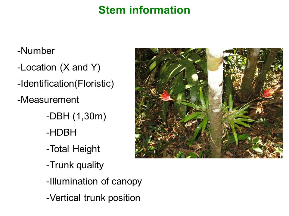 Stem information -Number -Location (X and Y) -Identification(Floristic) -Measurement -DBH (1,30m) -HDBH -Total Height -Trunk quality -Illumination of