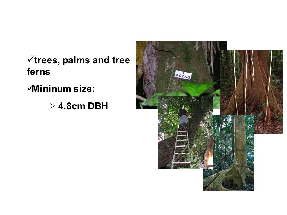 trees, palms and tree ferns Mininum size: 4.8cm DBH