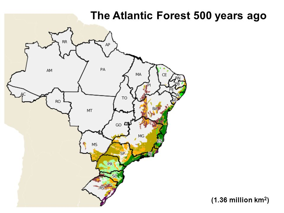 The Atlantic Forest today (92 thousand km 2 )