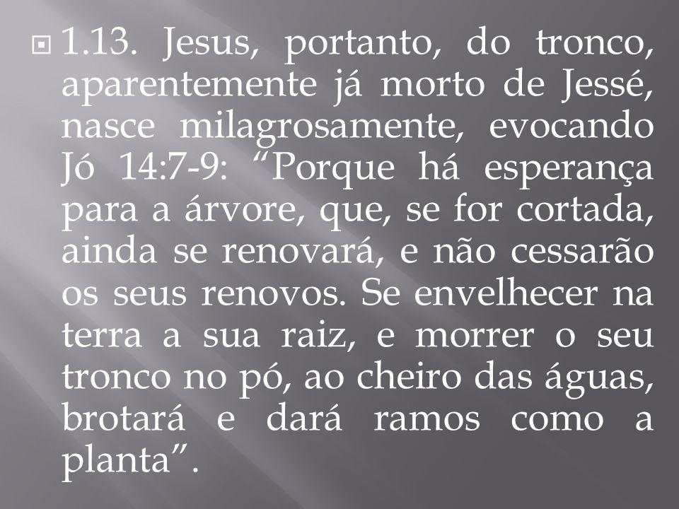 1.13. Jesus, portanto, do tronco, aparentemente já morto de Jessé, nasce milagrosamente, evocando Jó 14:7-9: Porque há esperança para a árvore, que, s