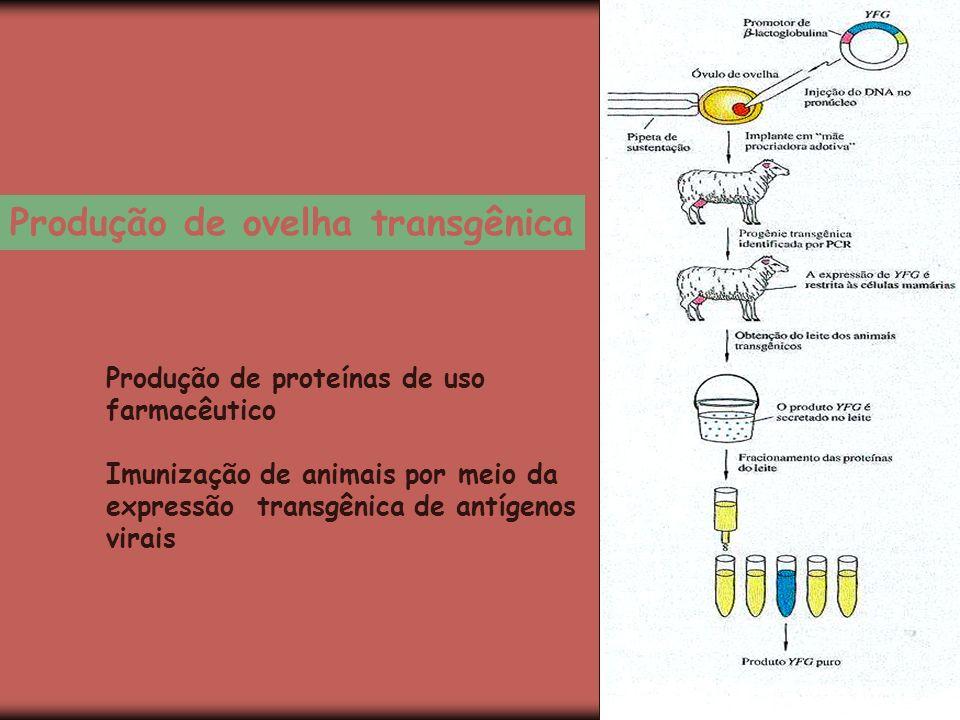Produção de ovelha transgênica Produção de proteínas de uso farmacêutico Imunização de animais por meio da expressão transgênica de antígenos virais