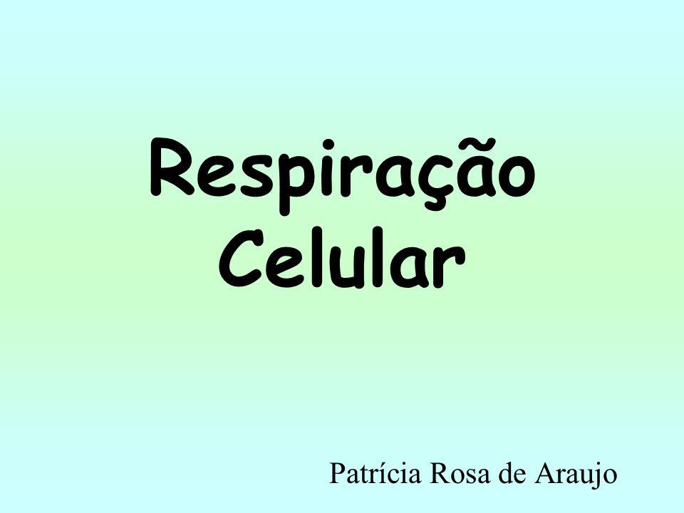Respiração Celular Patrícia Rosa de Araujo