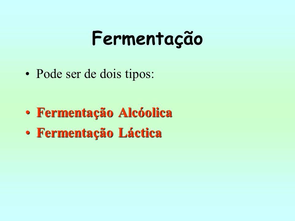 Fermentação Pode ser de dois tipos: Fermentação AlcóolicaFermentação Alcóolica Fermentação LácticaFermentação Láctica