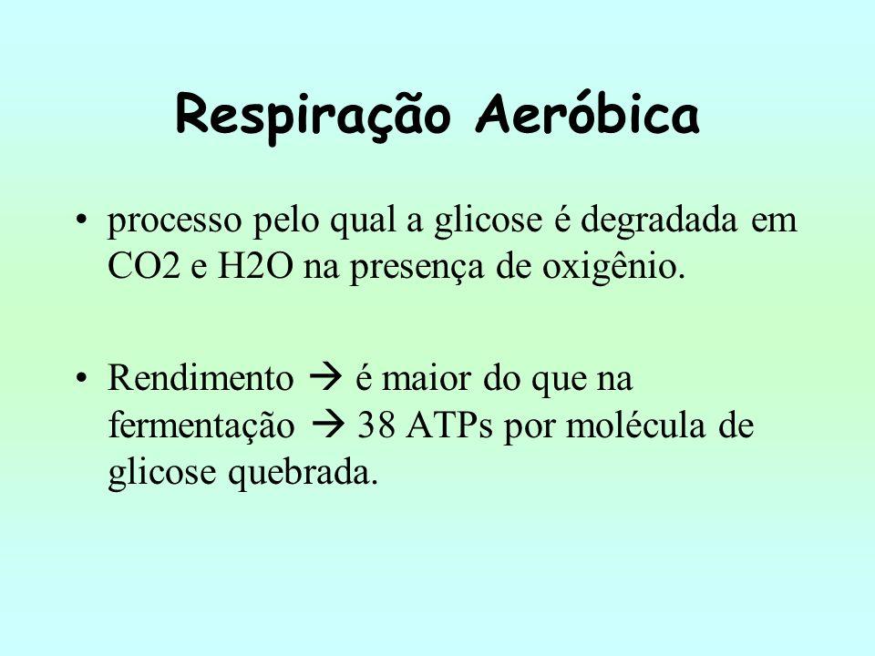 Respiração Aeróbica processo pelo qual a glicose é degradada em CO2 e H2O na presença de oxigênio. Rendimento é maior do que na fermentação 38 ATPs po