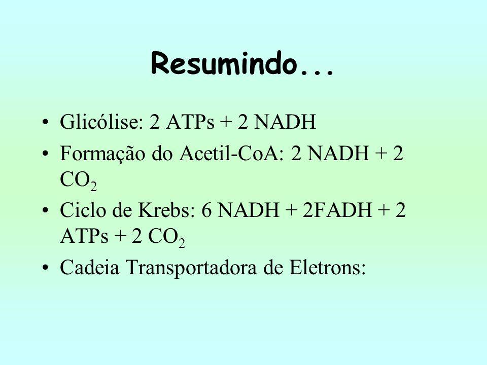 Resumindo... Glicólise: 2 ATPs + 2 NADH Formação do Acetil-CoA: 2 NADH + 2 CO 2 Ciclo de Krebs: 6 NADH + 2FADH + 2 ATPs + 2 CO 2 Cadeia Transportadora