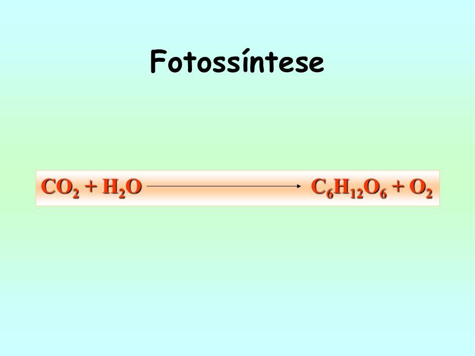 Fotossíntese CO 2 + H 2 O C 6 H 12 O 6 + O 2