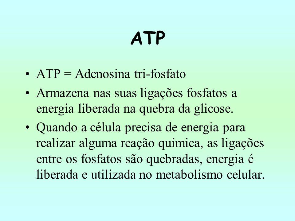 ATP Essa molécula é formada pela união de uma adenina e uma ribose aderida a três radicais fosfato