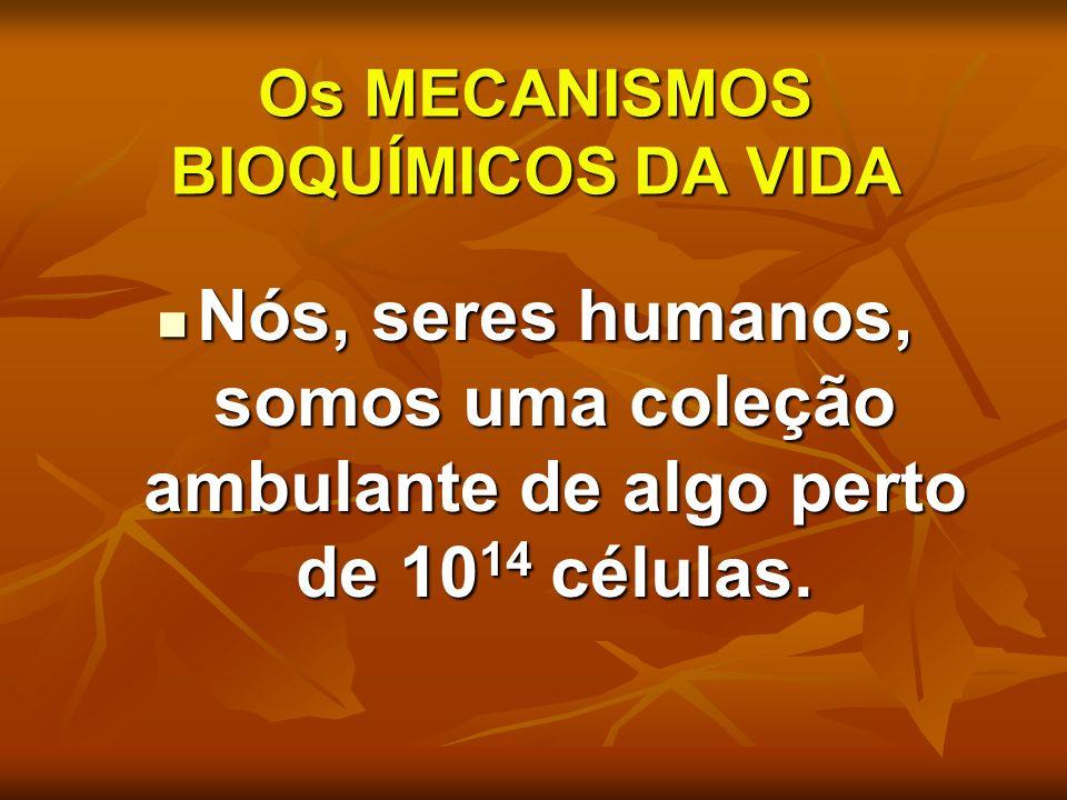 Os MECANISMOS BIOQUÍMICOS DA VIDA Nós, seres humanos, somos uma coleção ambulante de algo perto de 10 14 células. Nós, seres humanos, somos uma coleçã
