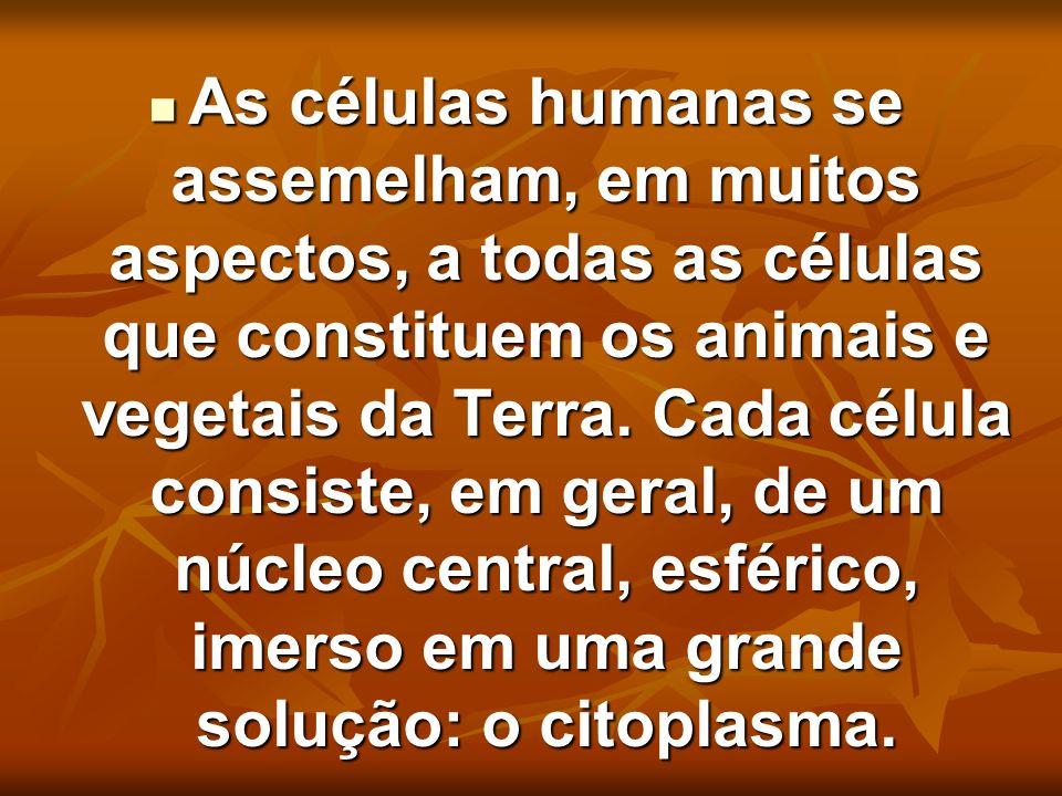As células humanas se assemelham, em muitos aspectos, a todas as células que constituem os animais e vegetais da Terra. Cada célula consiste, em geral