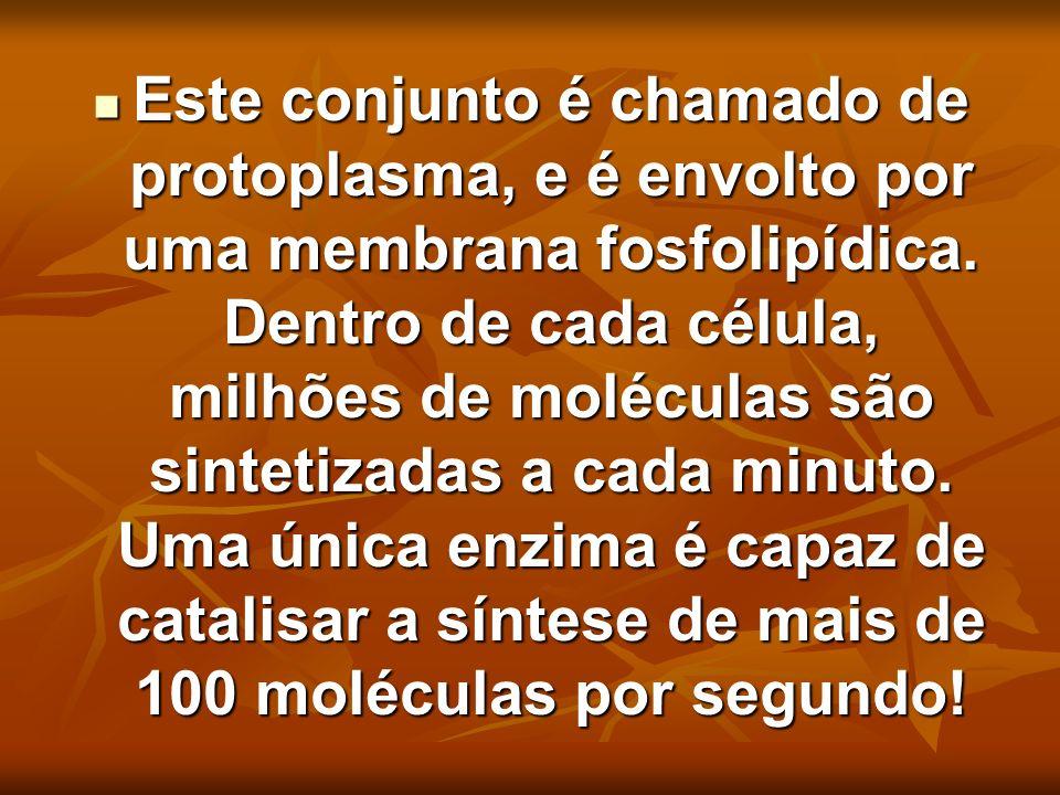 Este conjunto é chamado de protoplasma, e é envolto por uma membrana fosfolipídica. Dentro de cada célula, milhões de moléculas são sintetizadas a cad