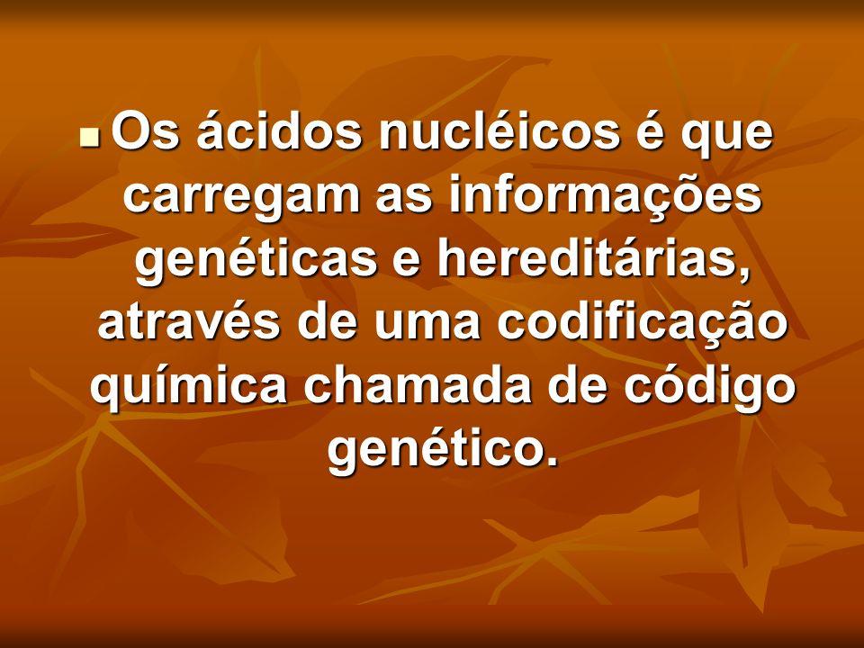 Os ácidos nucléicos é que carregam as informações genéticas e hereditárias, através de uma codificação química chamada de código genético. Os ácidos n